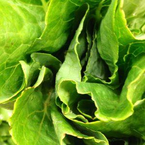 lettuce 8.14