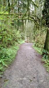 forest park fuzzies 2015